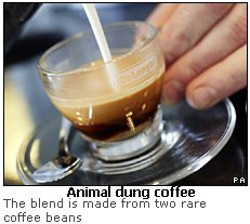 Animal dung coffee - photo#2